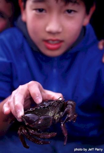 Crab holding